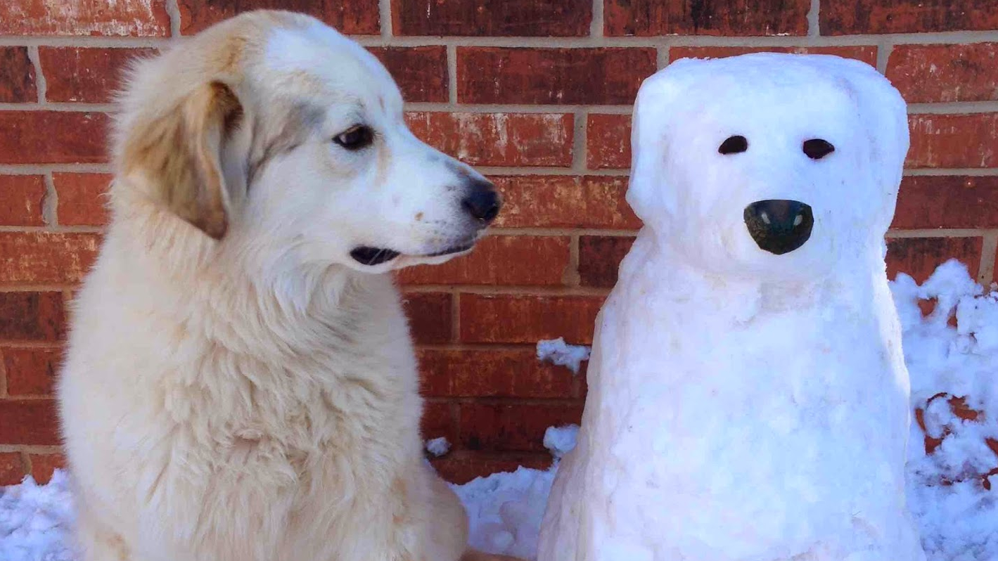 chien bonhomme de neige