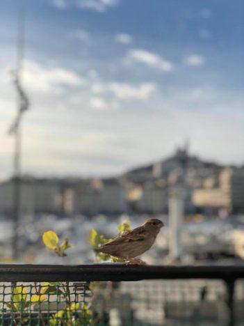 Les oiseaux de Marseille adorent séjourner à la caravelle