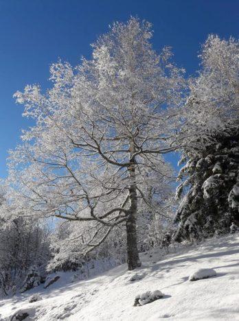Le parc de l'hotel du jeu de paume chamonix, sublime en hiver